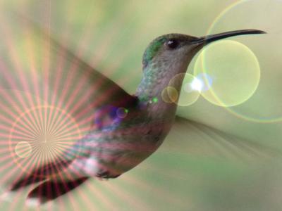 Tucusito / colibri